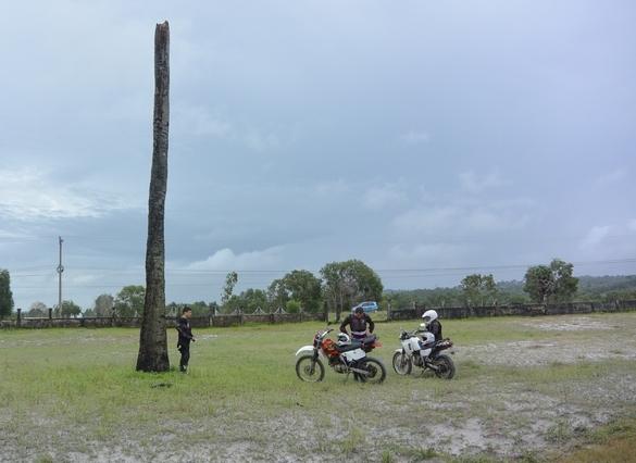 Многострадальная сгоревшая пальма