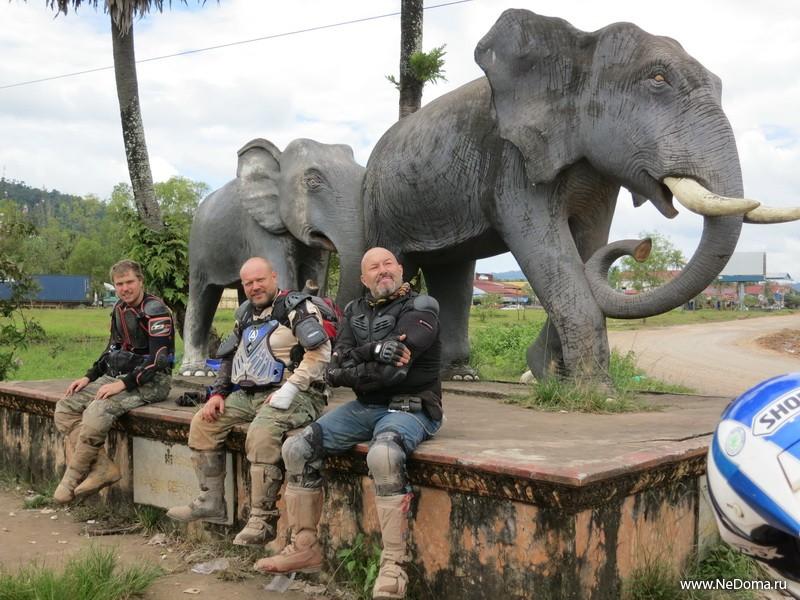 Слоны позируют