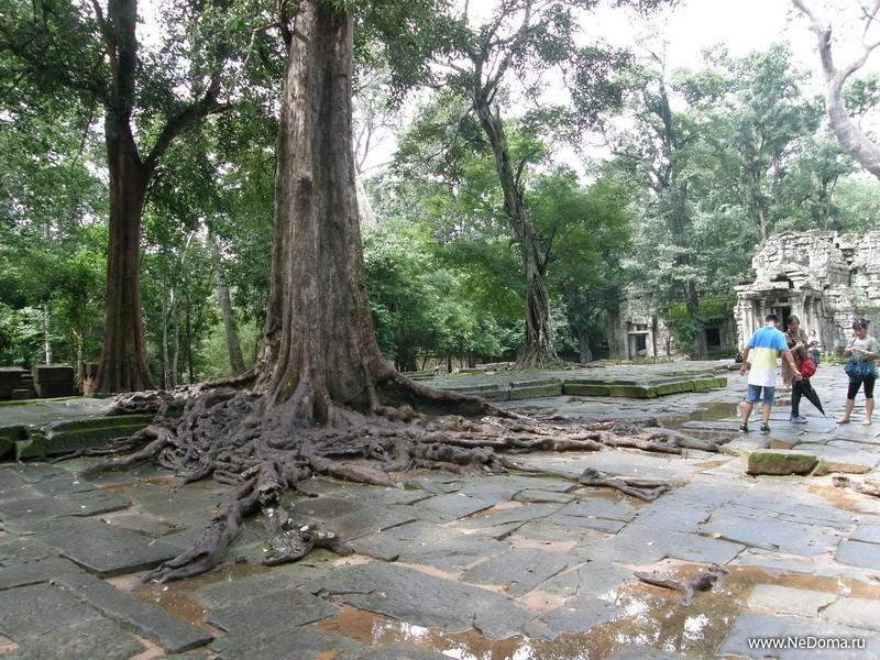 Джунгли захватывают храмы