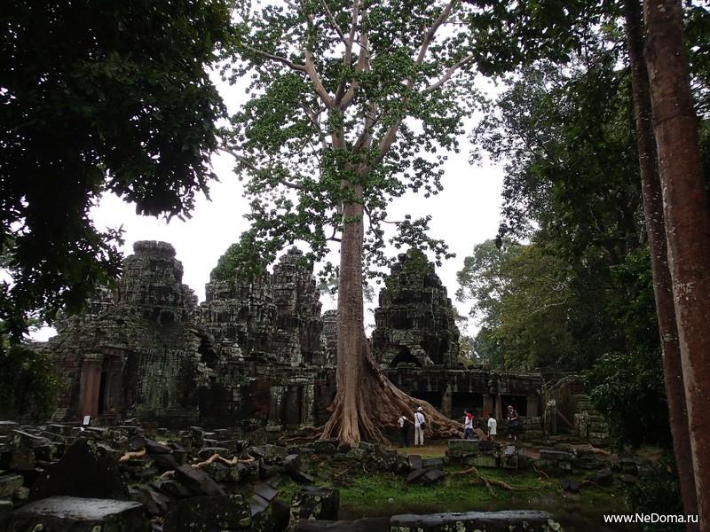 Храмы и джунгли