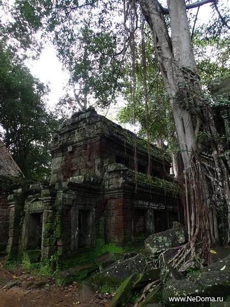 Корни деревьев просто пожирают древние храмы
