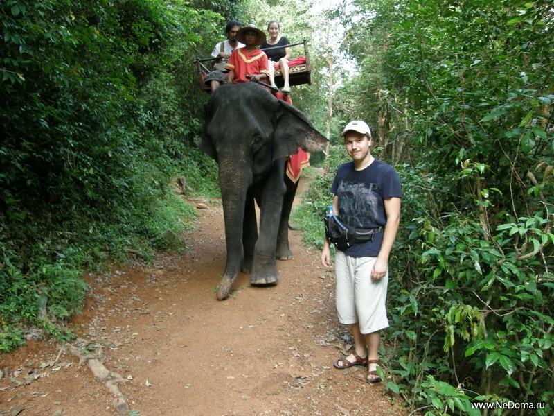 Слон живой, 1 штука