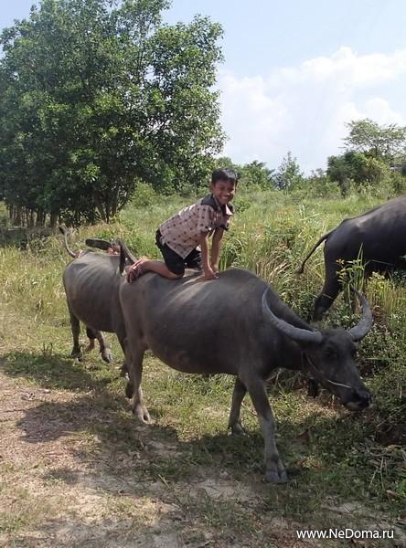 Маугли на быке