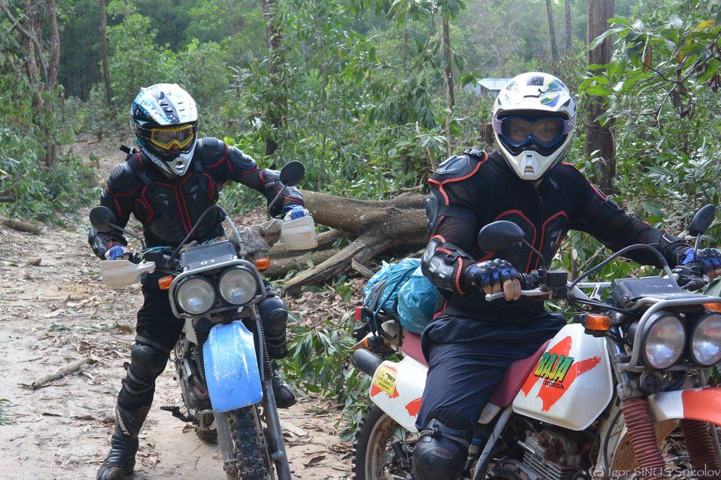 дорога идет через джунгли