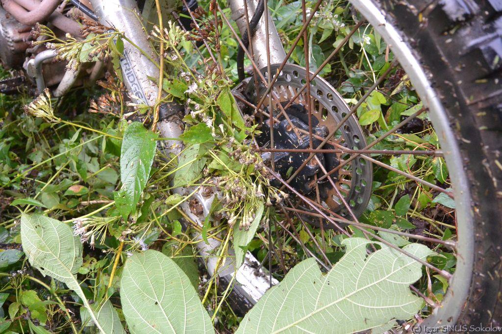 лианы - главный враг эндуристов в джунглях
