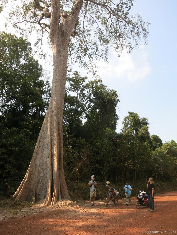 возле дерева силы