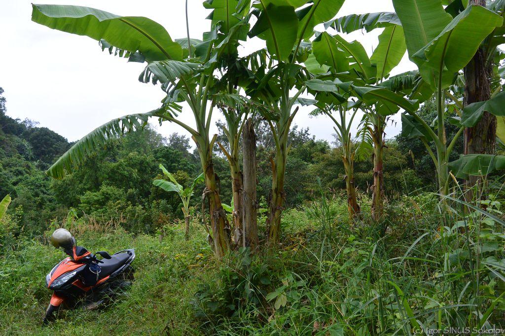 на банановых плантациях